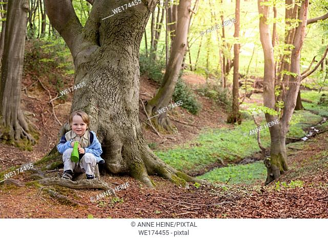 Boy sitting on forest floor leaning at beech tree. Hennef-Lichtenberg, Germany