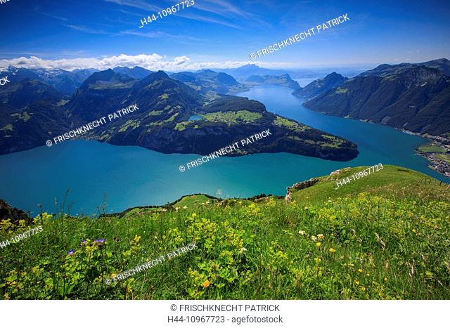 Alps, view, view from Fronalpstock, mountain, mountain panorama, mountains, flowers, Brunnen, Fronalpstock, body of water, water, Morschach, panorama, Pilatus