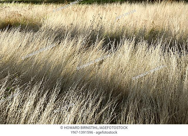 Horizontal shadows fall across a field of creamy dry grass