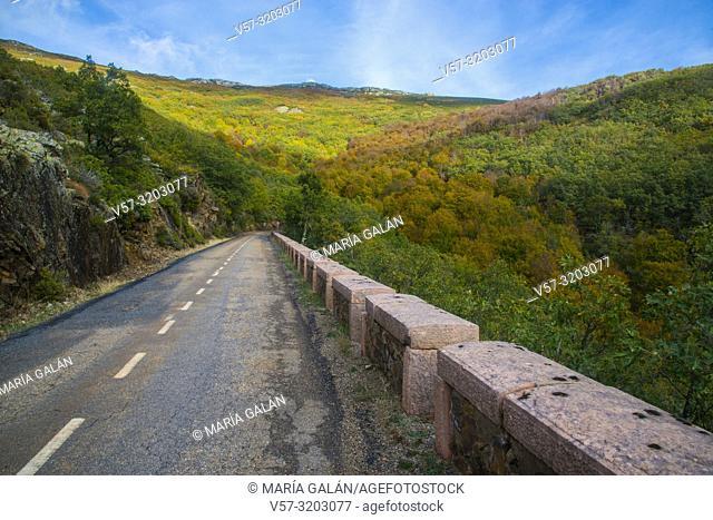 Autumn landscape. La Quesera mountain pass, Riofrio de Riaza, Segovia province, Castilla Leon, Spain
