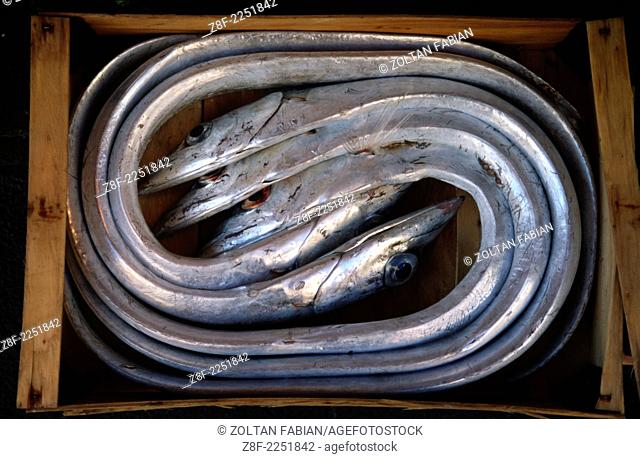 Curved and flat fishes in wooden box on the fish market, Milazzo, Sicily, Italy