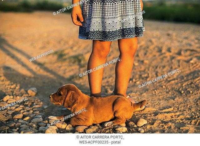 Puppy and girl at sunset