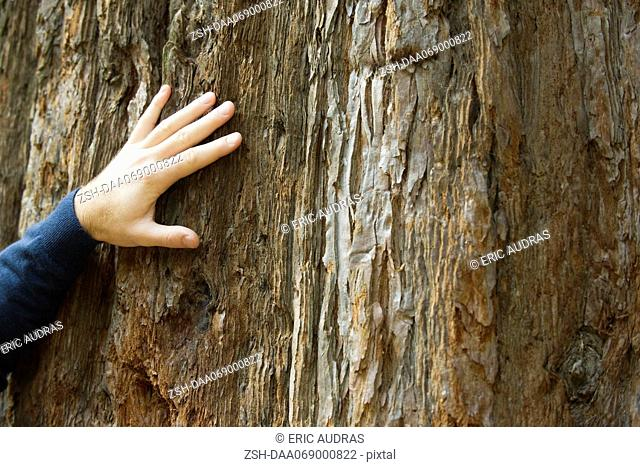 Man's hand on tree trunk, cropped