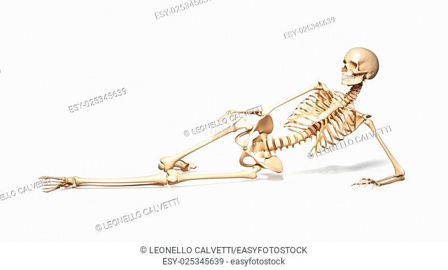 Skeleton of human female lying on floor. On white background. Clipping path included