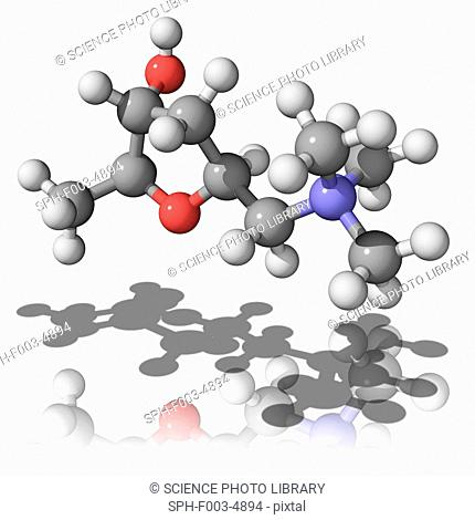 Muscarine, molecular model. This toxic compound is present in a number of mushrooms. Atoms are represented as spheres and are colour-coded: carbon grey