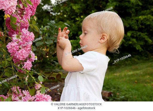 This photo shows a cute toddler girl wearing a white dress and playing with minature pink climbing roses and a humourous expression as she's closely examining...