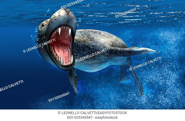 Leopard seal with close up on head and open mouth showing sharp teeth. Swimming under water, with blue ocean background