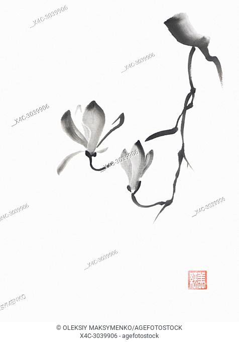 Beautiful black and white magnolia branch with two flowers artistic oriental style illustration, Japanese Zen Sumi-e black ink painting on white rice paper...