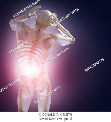 Skeleton inside transparent man with back pain