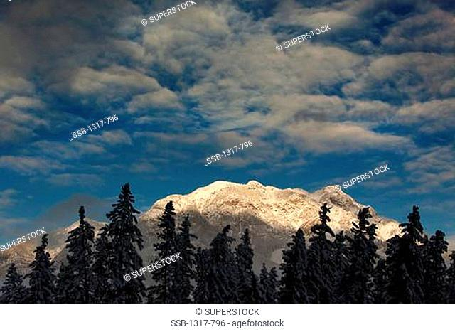 Trees in front of mountains, Mt Rundle, Canadian Rockies, Banff National Park, Alberta, Canada
