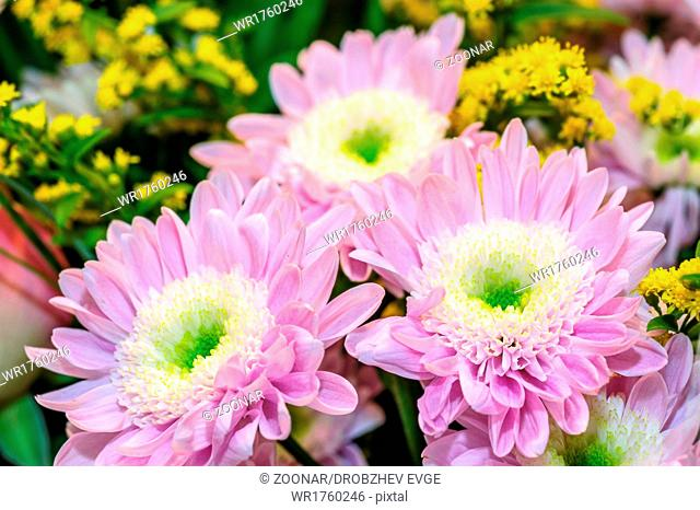 Bouquet of aster flowers