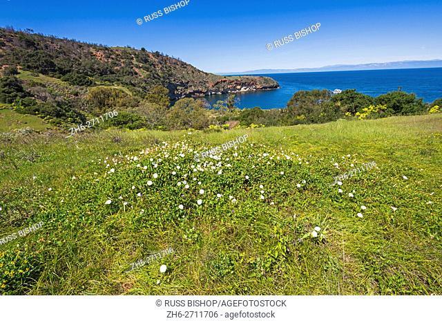 View from the Pelican Bay trail, Santa Cruz Island, Channel Islands National Park, California USA
