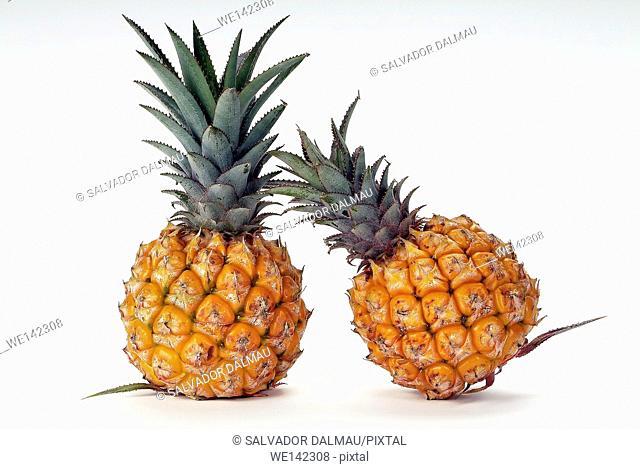 photography studio,creative fruit,pineapple fruit,location girona,catalonia,spain,europe,