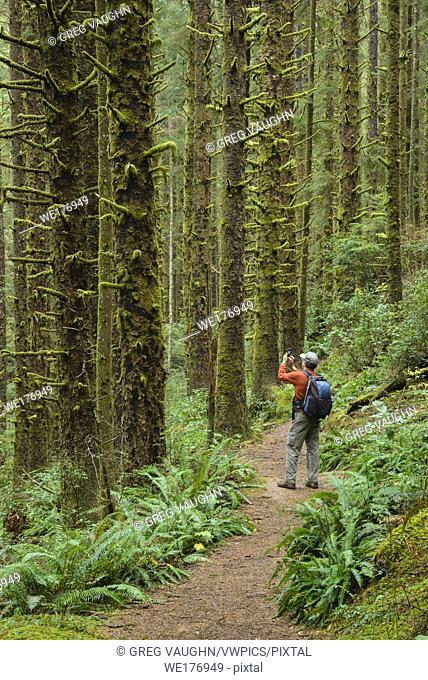 Hiker taking photo with cell phone on Siltcoos Lake Trail, Siuslaw National Forest, Oregon