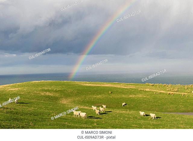 Rainbow over coastal pasture, Dunedin, Otago, South Island, New Zealand
