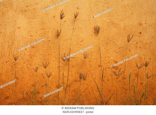 orange wall and plants beautiful background photo