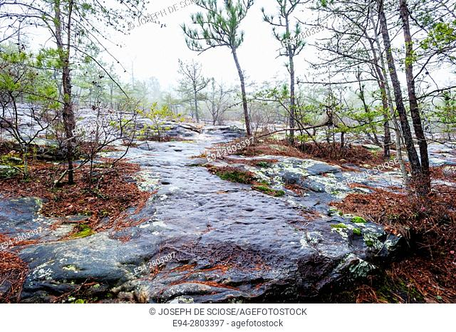 Sandstone glade with pine trees in the winter, The Moss Rock Preserve, Hoover, Alabama USA