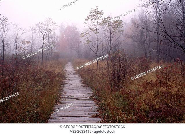 Boardwalk along Little Drummer Historic Trail, Allegheny National Forest, Pennsylvania