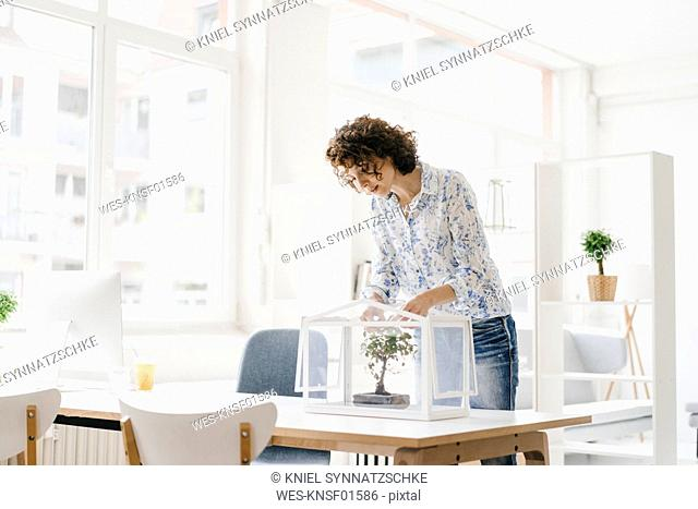 Businesswoman in office taking care of bonsai tree