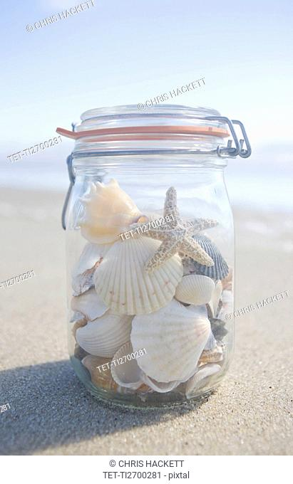 USA, Massachusetts, close up of shells in jar