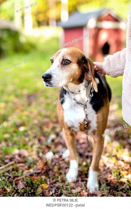 Portrait of dog in autumnal garden