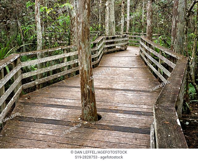 Corkscrew Swamp Florida Boardwalk