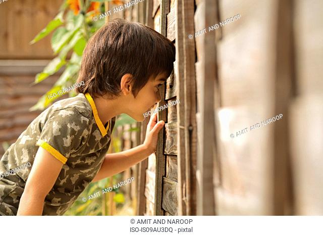 Waist up side view of boy peeking through wooden fence