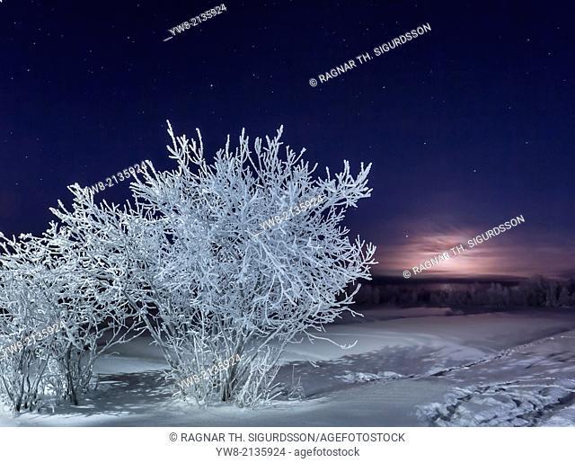Frozen landscape, cold temperatures as low as -47 celsius, Lapland, Sweden