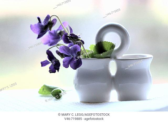 Miniature white salt and pepper holder holds a nosegay of purple wild violets against the window on white cloth  The backdrop is white light  Some leaves have...