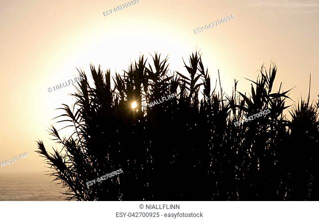 Tall grass plants are silhouetted against the setting sun and the Atlantic in southern Portugal
