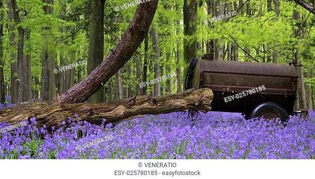 Old farm machinery in bluebell flowers in Spring forest landscape