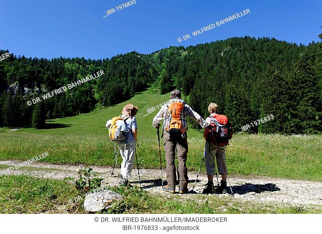 Mountaineers, hikers on a path on the Orterer Alm mountain pasture below Rabenkopf mountain, near Benediktbeuern, Upper Bavaria, Bavaria, Germany, Europe