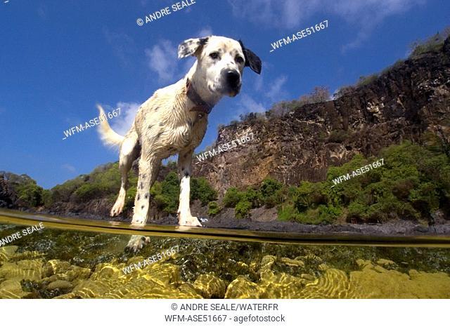 Dog at Beach, Fernando de Noronha, Pernambuco, Brazil