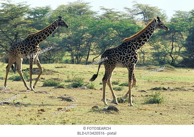 africa, animals, aichner, African, Africa