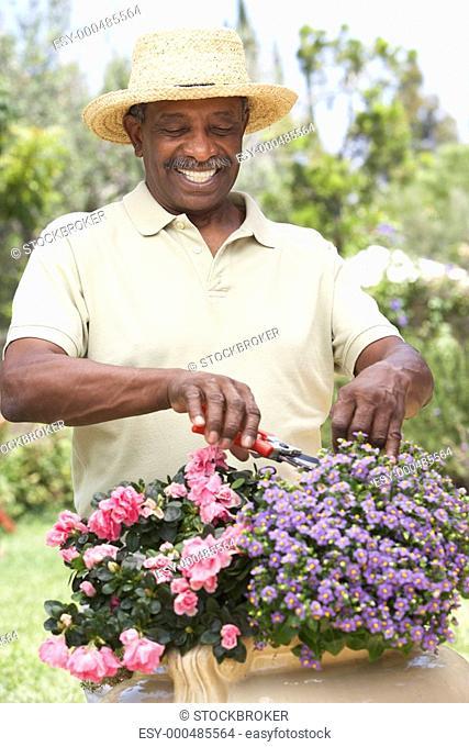 Senior Man Gardening