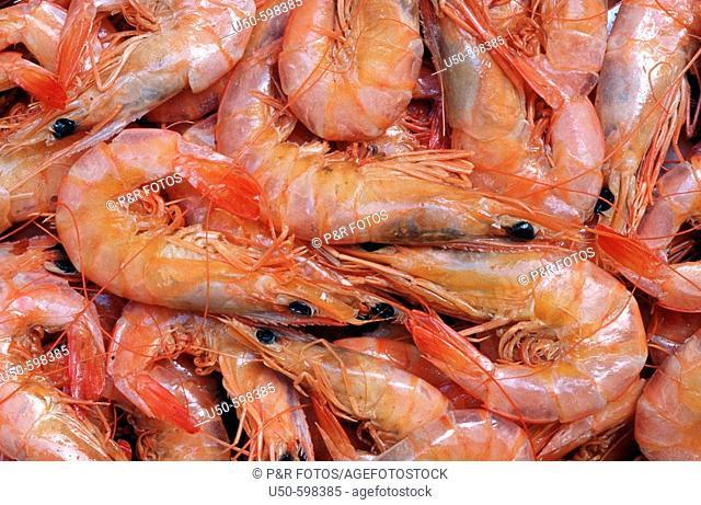 Dried shrimps,  São Luis. Maranhão. Brazil