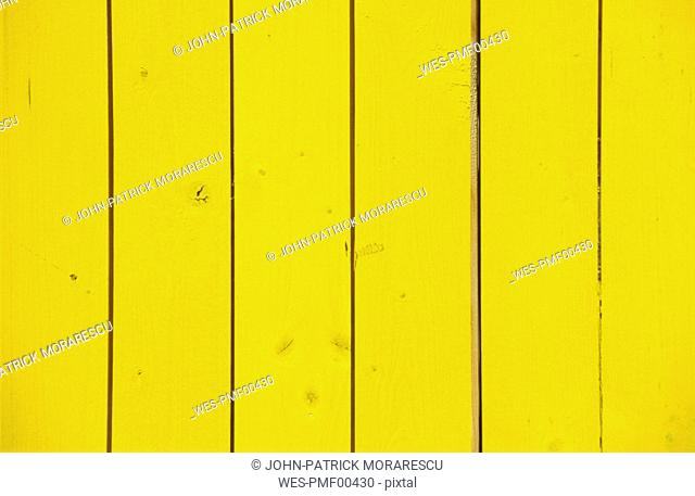 Limber wall in yellow