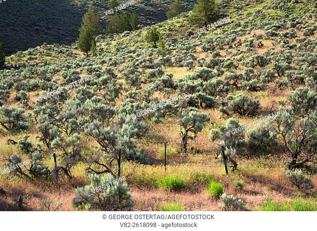 Sagebrush slope, Riverside Wildlife Area, Oregon