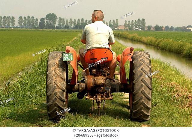 Tractor in rice field near Roncoferraro. Lombardy, Italy