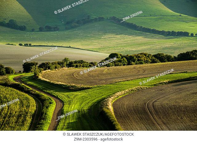 Late summer afternoon in South Downs National Park, East Sussex, England