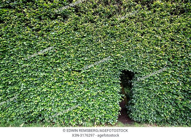 Hedge with Rectangle cut into it, Levens Hall , Kendal, Cumbria , UK