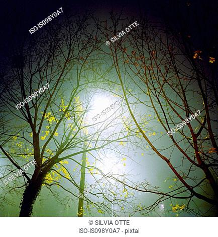 Trees in fog at night