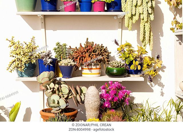 Terrace garden with succulents, cactus and other sub tropical plants on shelving in Playa de Las Americas, Tenerife, Canary Islands, Spain