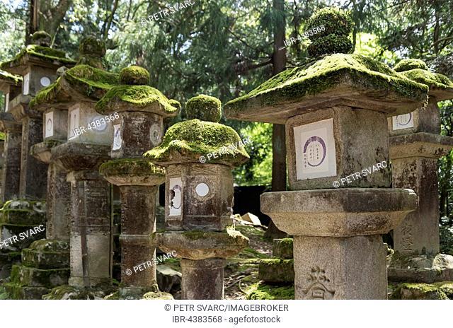 Toro, stone lanterns, along the path to Kasuga Taisha Shrine in Nara, Japan