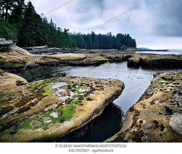Beautiful landscape and tide pools at Botanical Beach Juan de Fuca Provincial Park shoreline scenery, Port Renfrew, Vancouver island, British Columbia