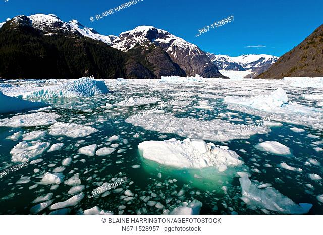 Icebergs and ice floes, LeConte Bay near LeConte Glacier, between Petersburg and Wrangell, southeast Alaska USA