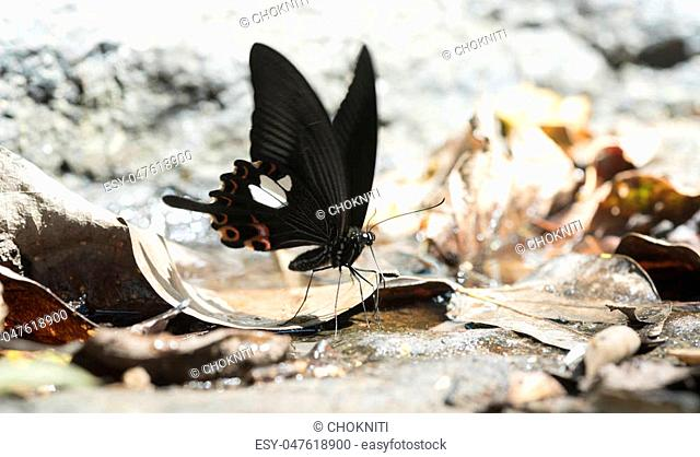 butterfly on nature ground