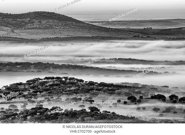 Landscape with frog. Alburquerque. Province of Badajoz. Extremadura. Sapin