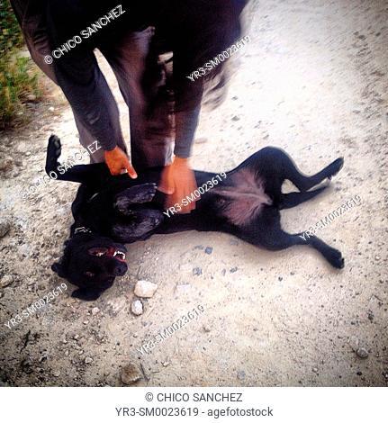 A man scratches a dog in a road in Prado del Rey, Sierra de Cadiz, Andalusia, Spain