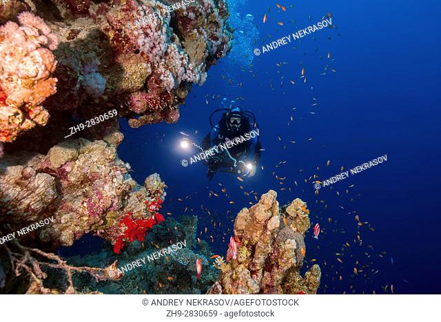 Underwater videooperator shoting scool of fish near coral reef, Red sea, Sharm El Sheikh, Sinai Peninsula, Egypt